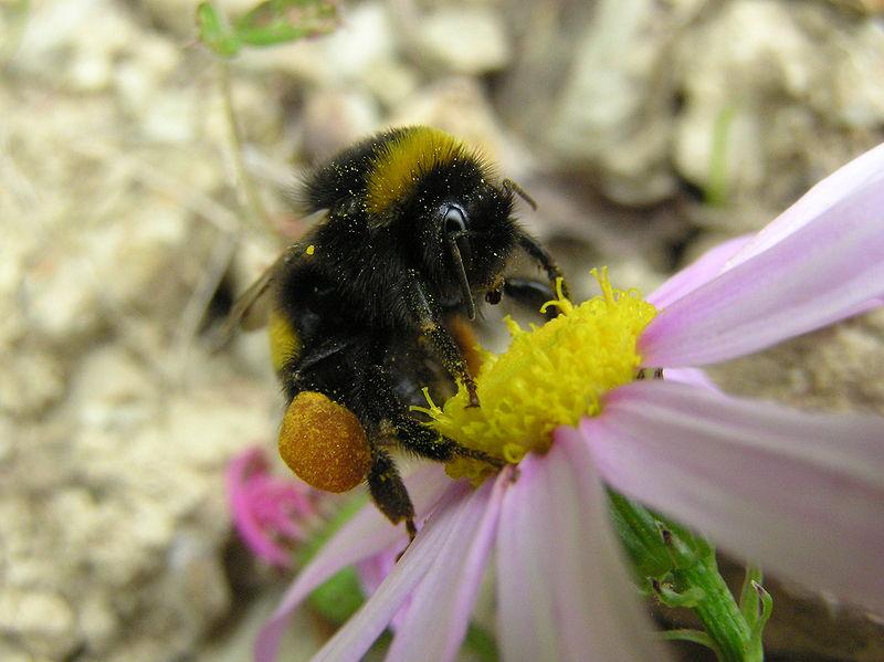 Bumblebee_electrifies