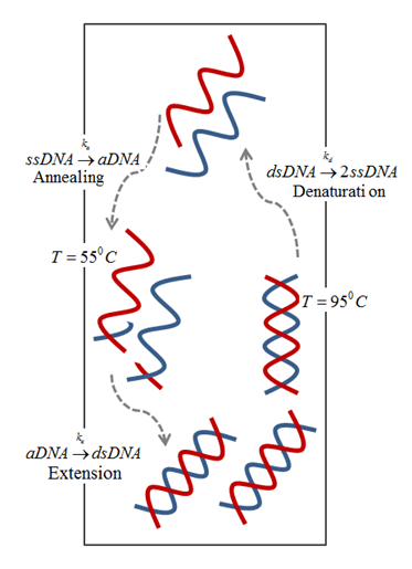 Schematic of buoyancy-driven PCR