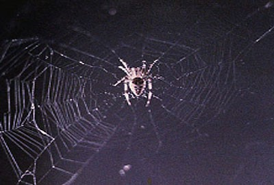 A spider in its web in space.