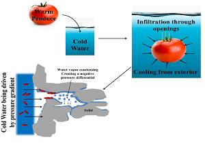 hydrocooling of a tomato