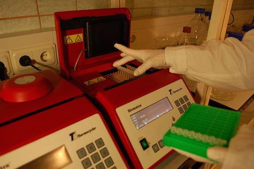 将 PCR 试管放入热循环仪中。