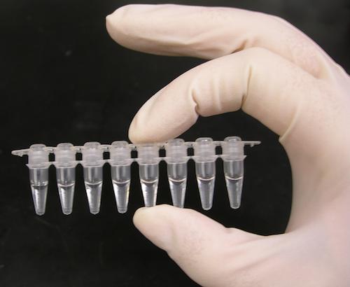 聚合酶链式反应试管。