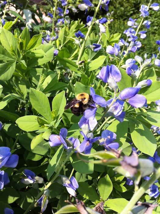 蜜蜂停留在花朵上的照片。