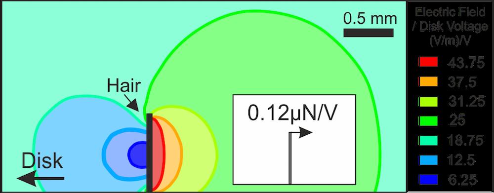 仿真结果描绘了熊蜂绒毛曝露于距离带电钢盘电场 1 cm 范围内的情况。