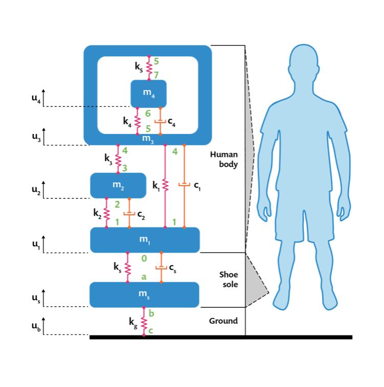 人体集总模型。