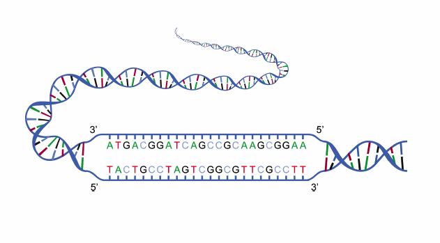 显示DNA链结构的图示。