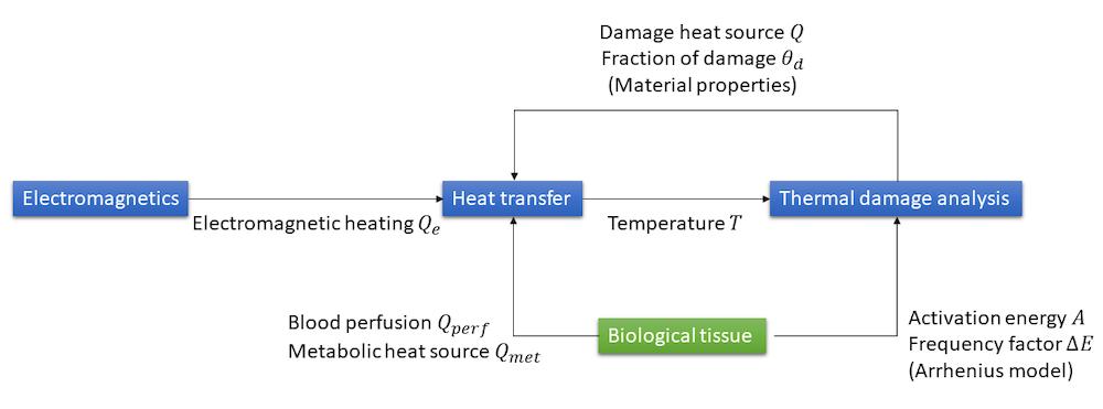 用于建模热疗的不同多物理场耦合图