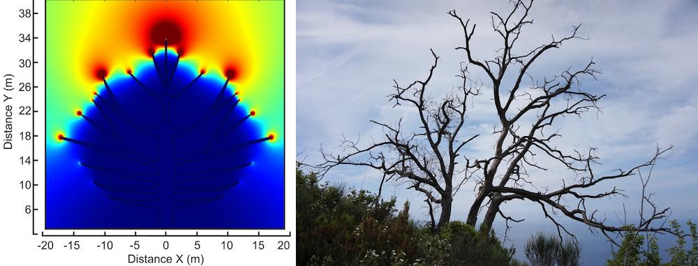 并排图像比较树枝周围的电场模型和裸露树枝的树木照片。