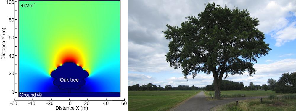 并排图像将橡树周围的电场图与带有完整树枝的橡树的照片进行比较。