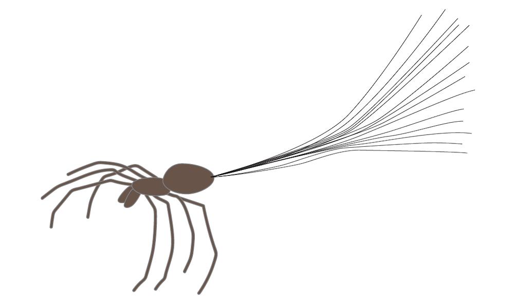 蜘蛛在膨胀时的绘图,这种行为给人以反重力蜘蛛的印象。