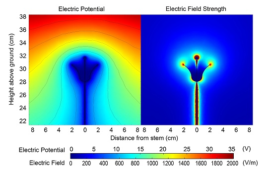 Electrical, Flower Electric Potentials And Fields small