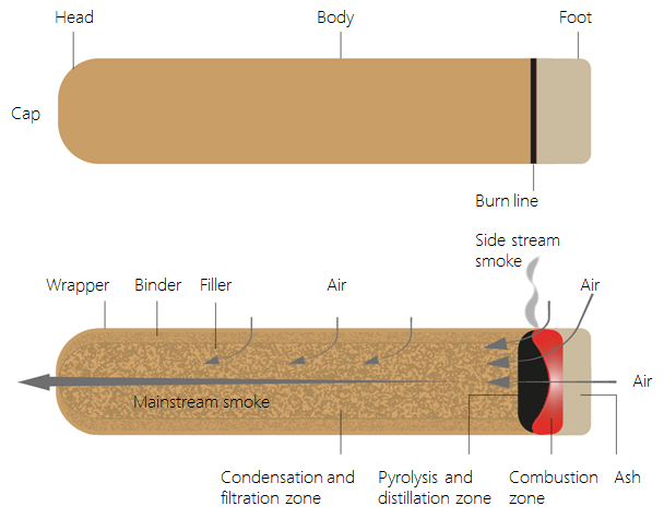 Image showing the structure and process zones in a cigar.