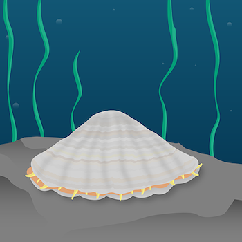 Limpet teeth_featured image