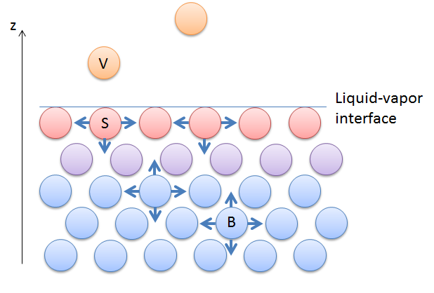 A diagram depicting surface tension in a liquid that is interacting with its vapor.