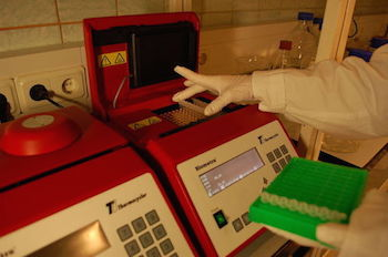 Adding tubes to thermal cycler_featured