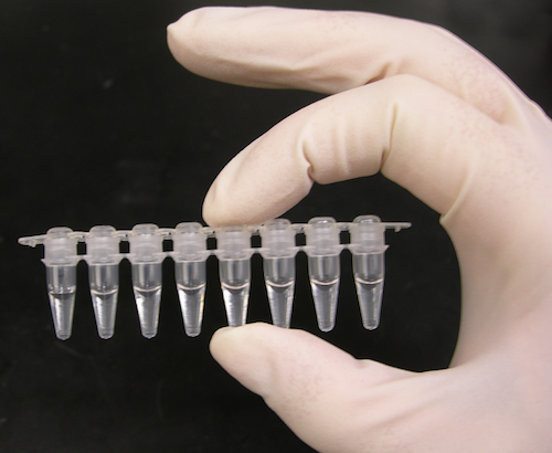Polymerase chain reaction test tubes.