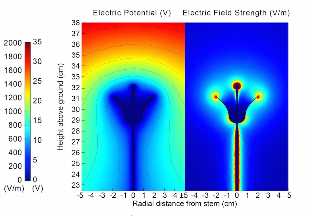 Simulation depicting a flower's electric field potential and electric field strength.
