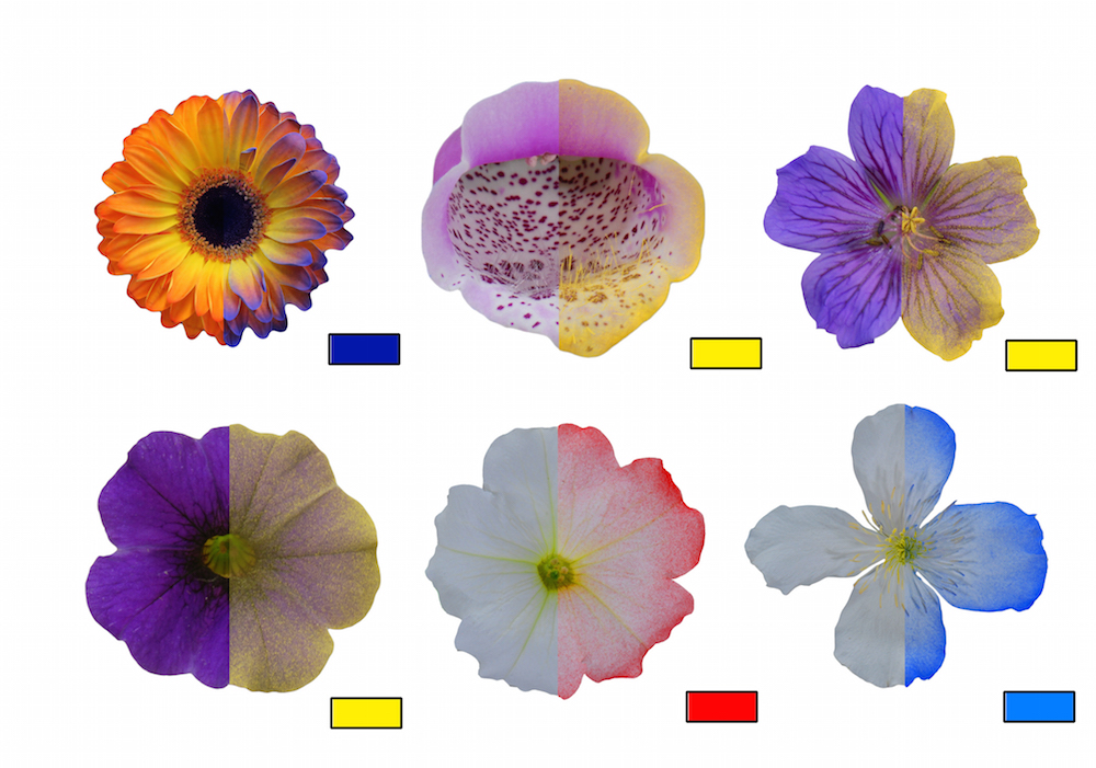 Flowers sprayed with an electrostatic-colored powder.