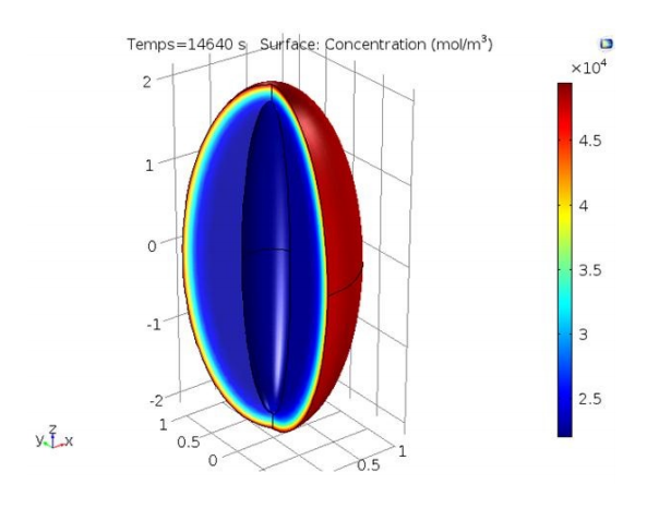 A simulation plot showing moisture concentration distribution in a date after 4 hours of hydration.