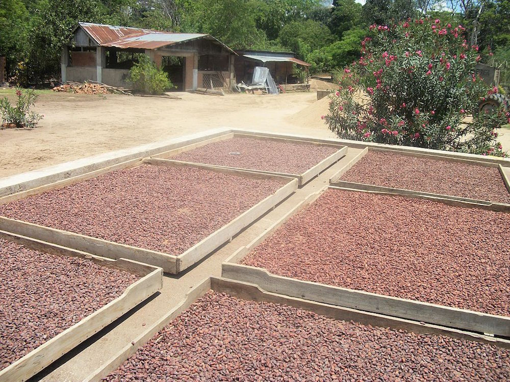 A photo of the solar food drying process.