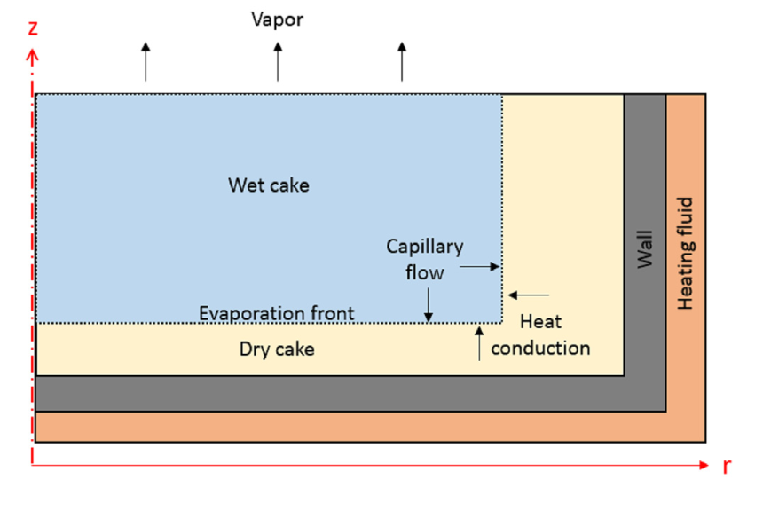 Schematic displaying an axisymmetric Nutsche filter dryer and the vacuum drying process.