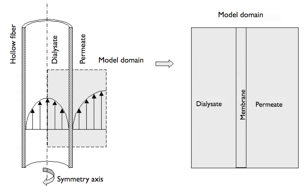 Side-by-side graphics showing the setup of a hollow fiber, dialysate, and permeate as well as the model domain.