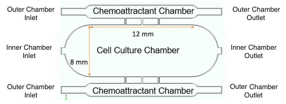 A schematic of a three-chamber culture chip system.