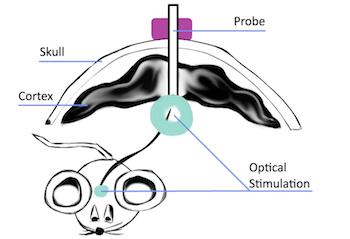 Optogenetics schematic featured