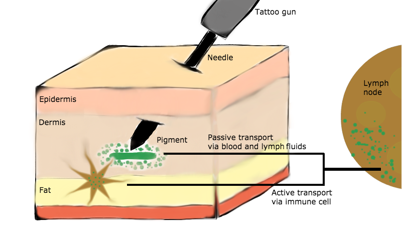 Studying The Safety Of Tattoos With Mass Spectrometry And