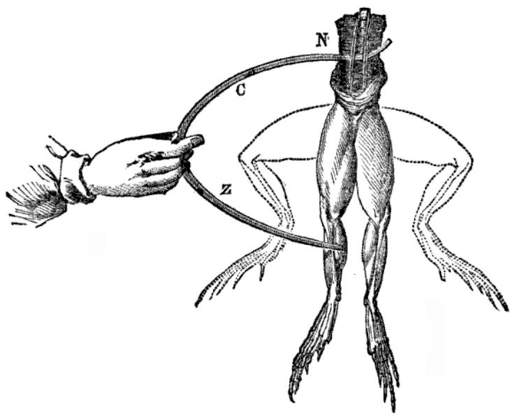A schematic of a frog twitching when touched by electrodes.