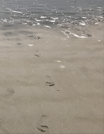 A photograph of footprints in the sand, which can be preserved and exposed via coastal erosion.