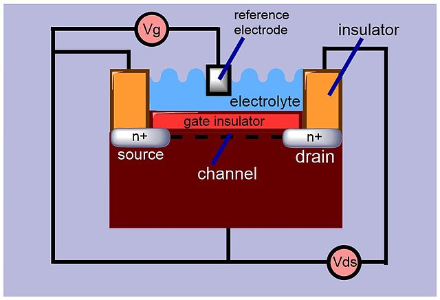 An illustration of a typical ISFET design.