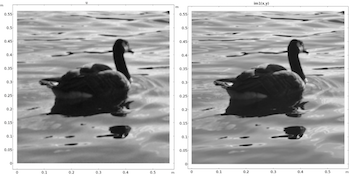image-denoising-bird-featured