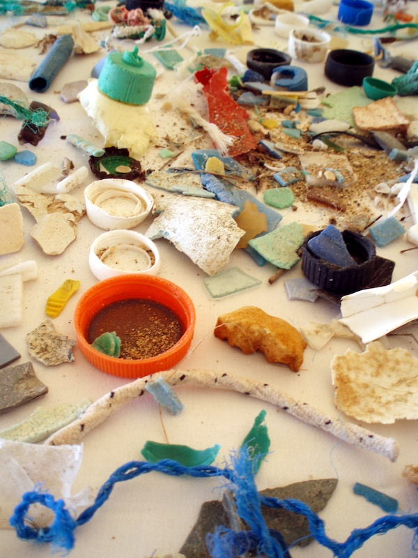 A photograph of microplastics found in the Great Pacific Garbage Patch, a floating ocean gyre.