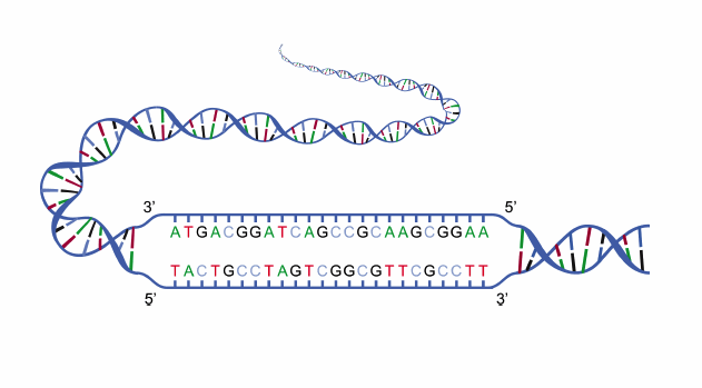 An illustration showing the structure of a DNA strand.