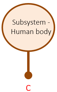 A graphic of the human body modeled as a single-port subsystem.