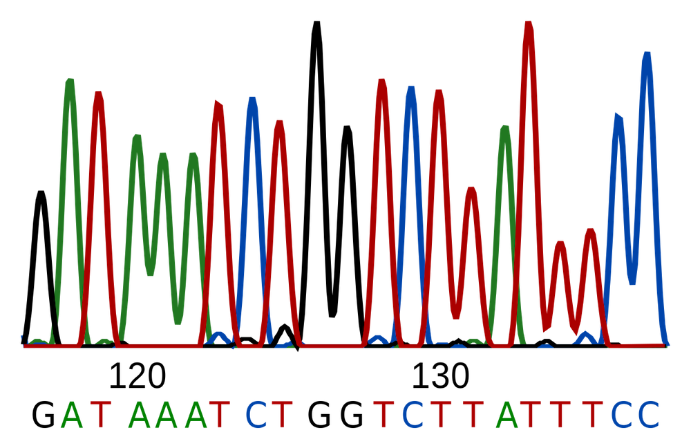 A graphic showing a DNA sequencing trace.