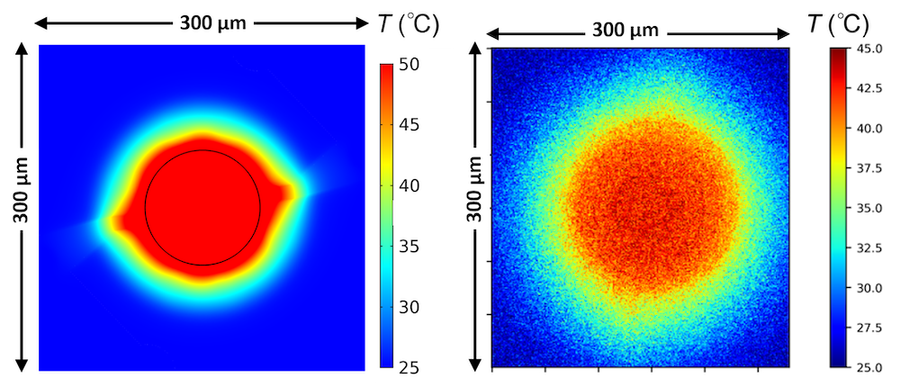 Side-by-side images comparing the thermal analysis with the microscopy results.