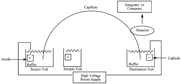 A simple schematic of the capillary electrophoresis (CE) process with parts labeled.