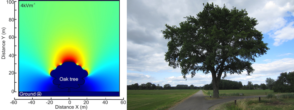 Side-by-side images comparing a plot of the electric fields around an oak tree with a photograph of an oak tree with full branches.