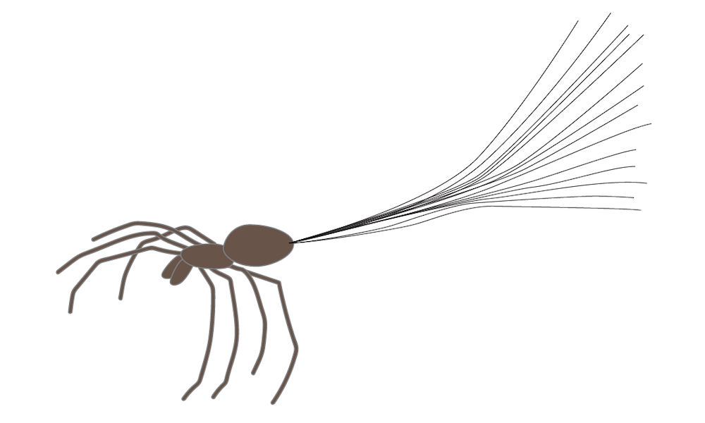 A drawing of a spider as it is ballooning, a behavior that gives the impression of gravity-defying spiders.