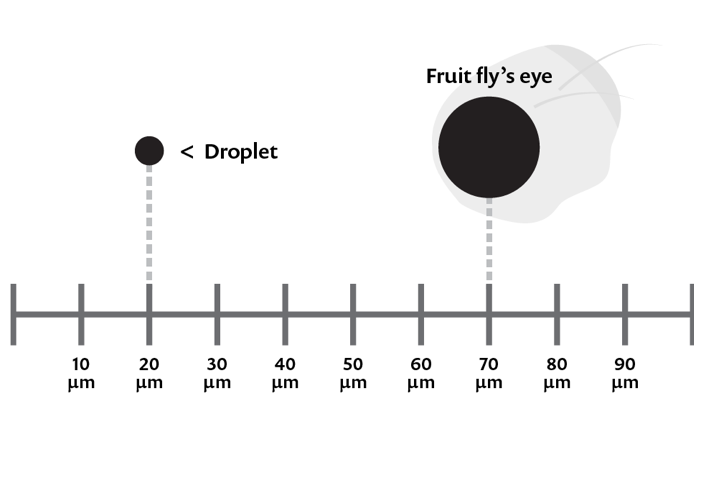 An illustration of a sizing graph comparing the size of an aerosol and droplet at 20 microns to the eye of a fruit fly at 70 microns.