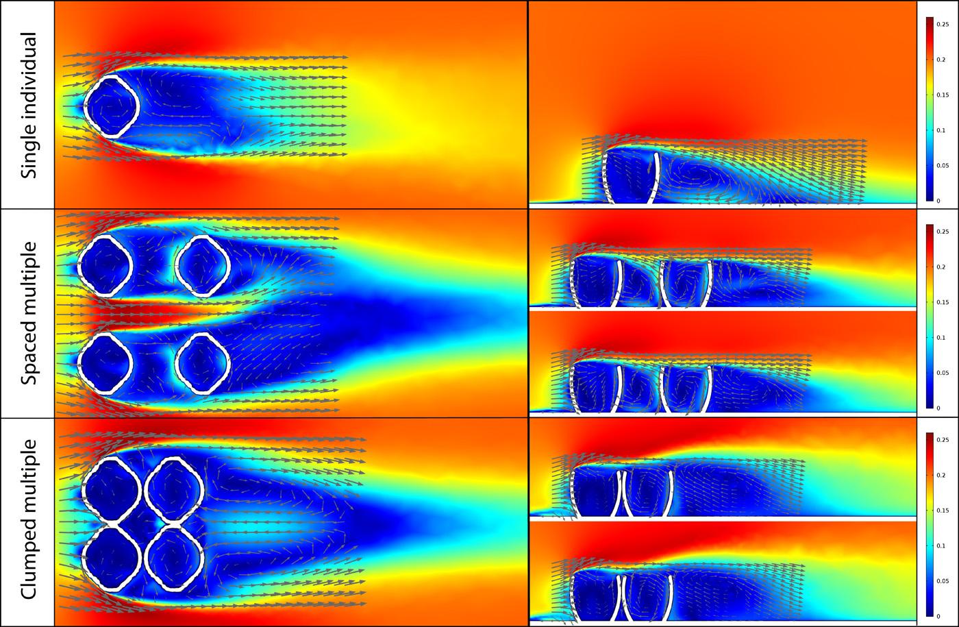 CFD simulation results for a single Ernietta model (top), a well-spaced population of Ernietta models (middle), and a clumped population of Ernietta models (bottom).