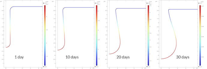 Four plots showing the corrosion rate at the metal surface after 1, 10, 20, and 30 days.